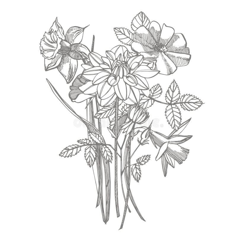 Rosen- und Dahlienblumenblumenstrauß lokalisiert auf weißem Hintergrund Stellen Sie von zeichnenden Kornblumen, Florenelemente ei stock abbildung