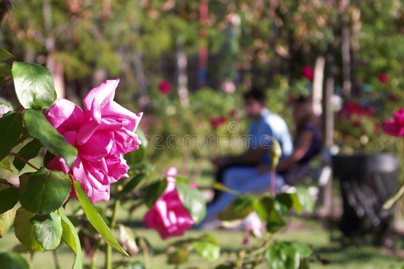 Rosen und ein paar Liebhaber stockfotos