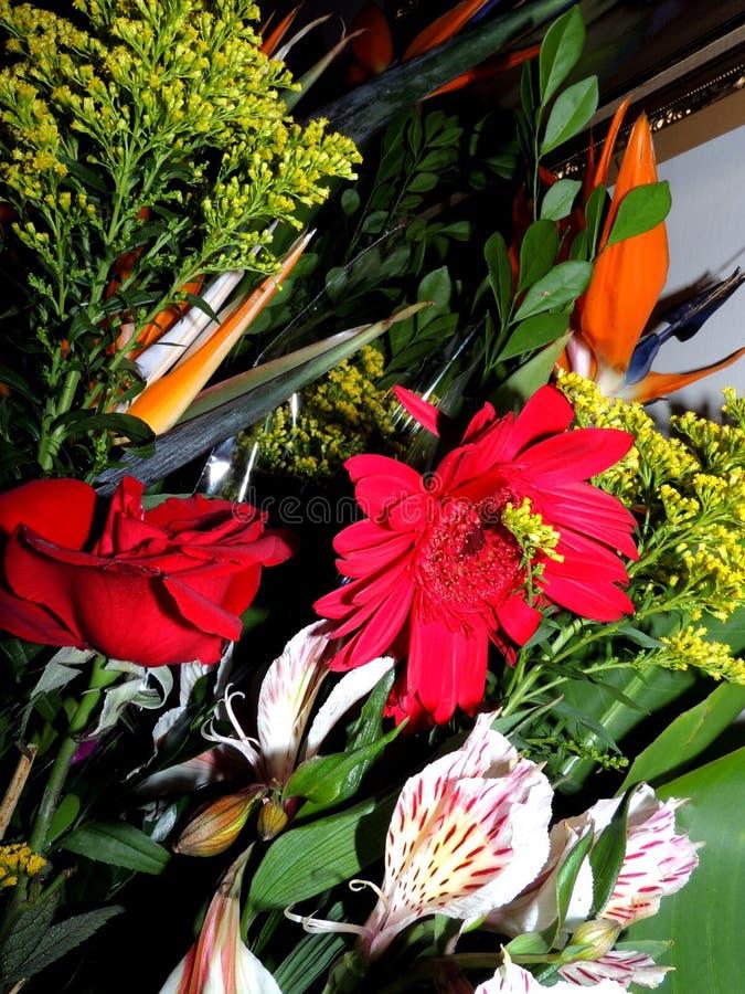 Rosen und tropische Blumenanordnung stockfoto