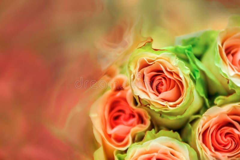 Rosen, undeutlich von den süßen Farbrosen in der weichen Unschärfe der Beschaffenheit für Hintergrund mit Pastellweinleseretrosti lizenzfreies stockbild