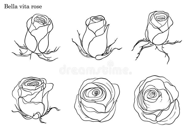 Rosen-Vektor eingestellt eigenhändig zeichnen stock abbildung