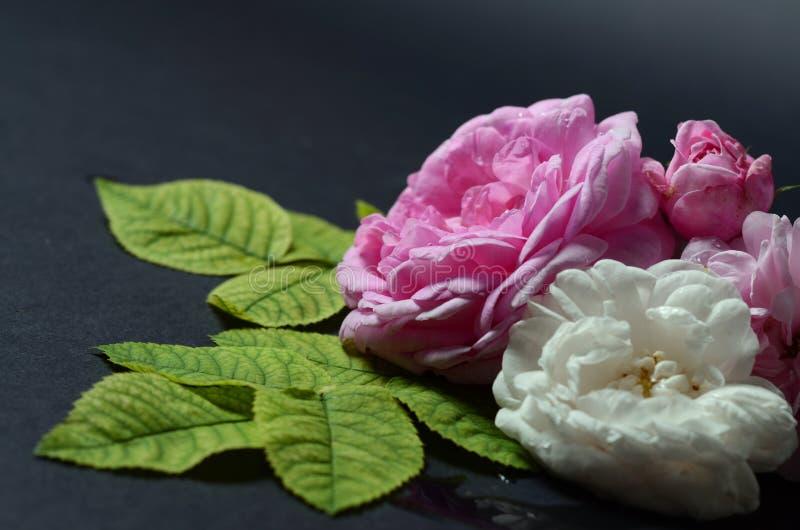 Rosenblumen auf einem schwarzen Hintergrund stockfoto