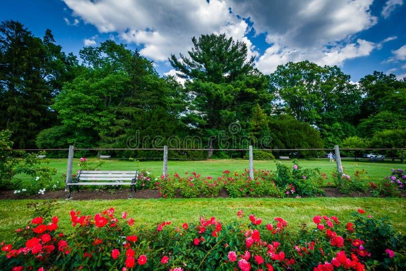 Rosengärten bei Elizabeth Park, in Hartford, Connecticut lizenzfreie stockbilder