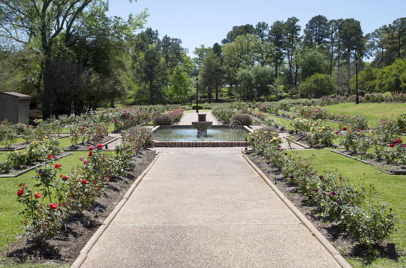 Rosengarten in Tyler-Frühjahr lizenzfreies stockfoto