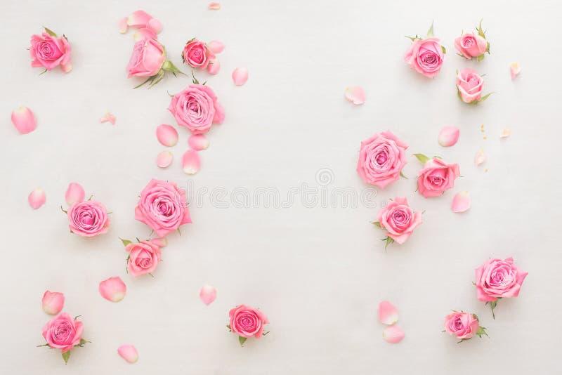 Rosenknospen und -blumenblätter zerstreuten auf weißen Hintergrund stockfoto