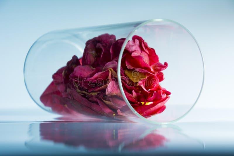 Rosepeddals положило в стекло стоковые изображения