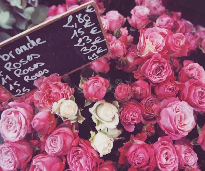 Roses à Strasbourg images stock