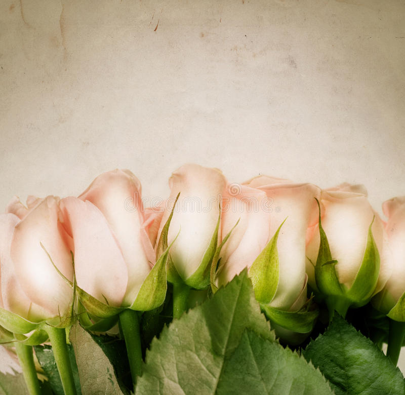Download Roses stock photo. Image of frame, floral, close, copy - 12414830