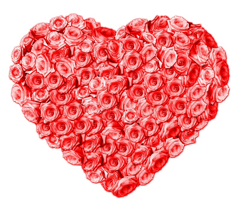 Roses. Isolated heart shape. Red roses stock photo