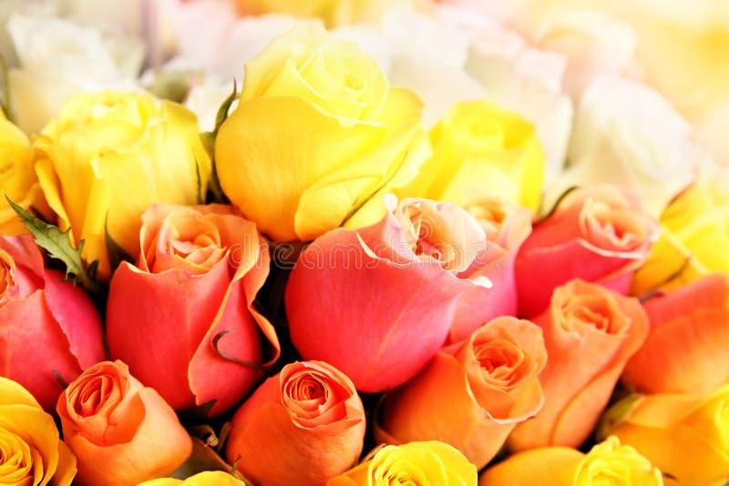 Download Roses stock image. Image of copyspace, fine, closeup - 18688369