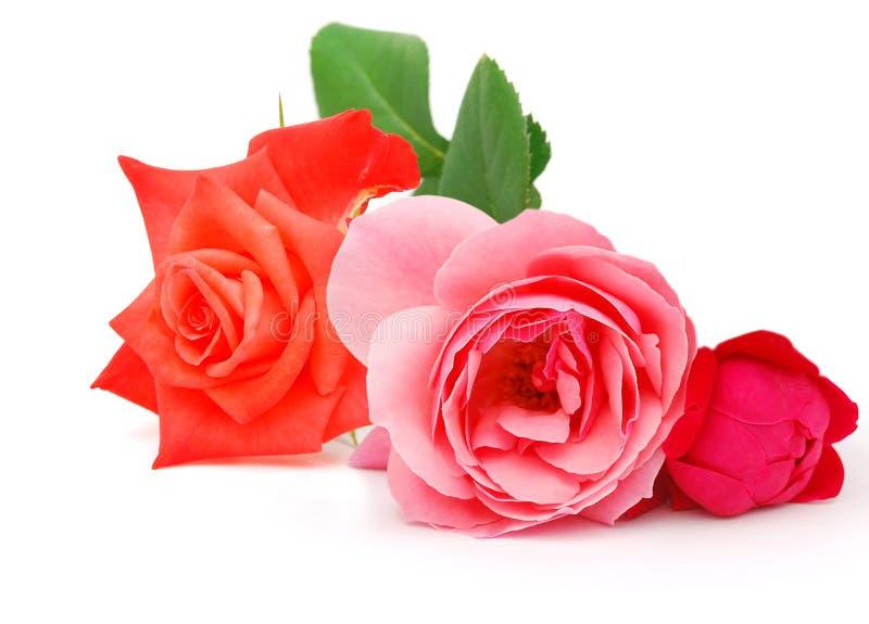 Download Roses stock image. Image of stems, elegance, florist - 20126513