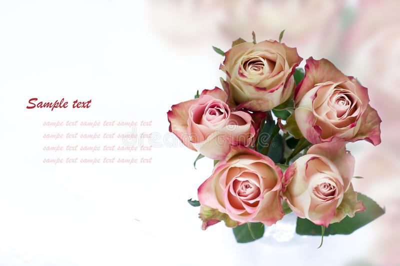 Roses. Bouquet of white-pink roses on coloured background stock image