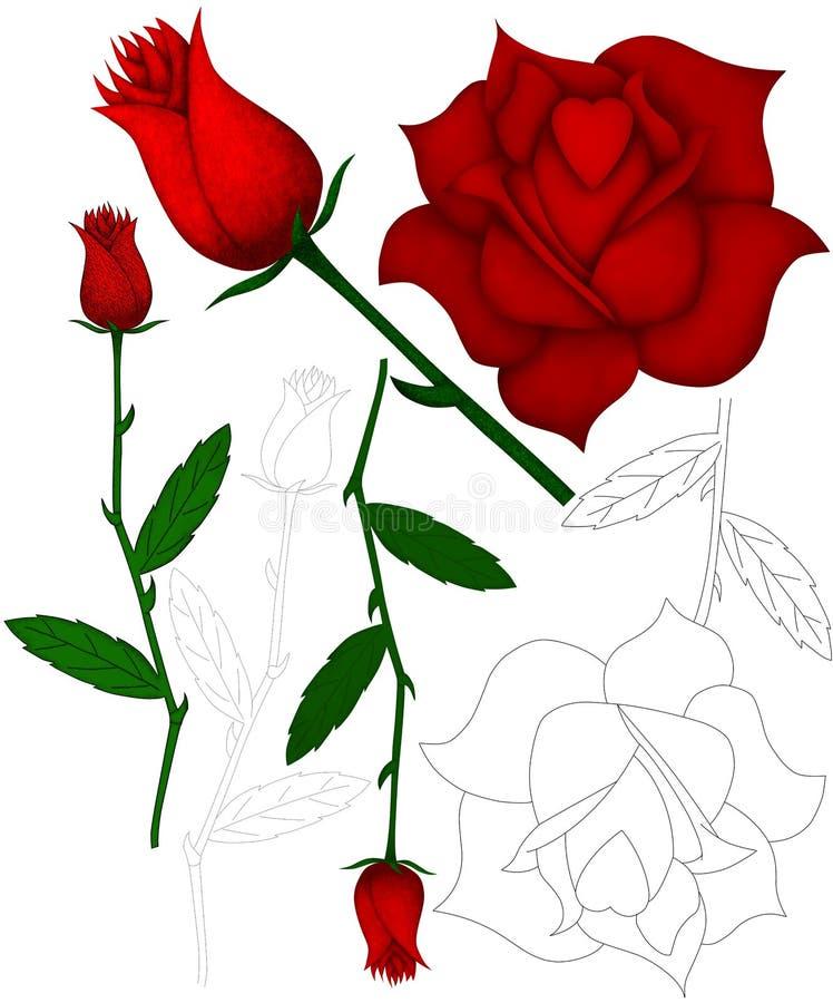 Download Roses stock illustration. Image of floweret, care, caring - 24239983