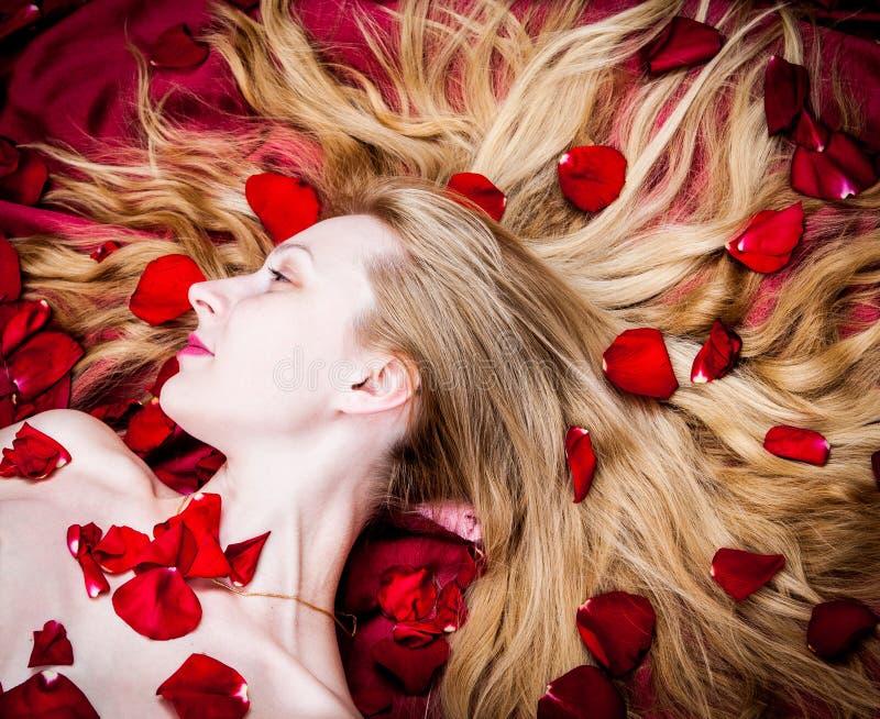 Download Roses stock photo. Image of rose, portrait, glamorous - 24937090