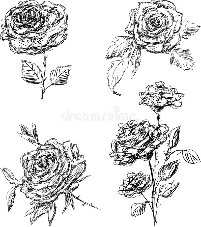 Download Roses Stock Image - Image: 26203311