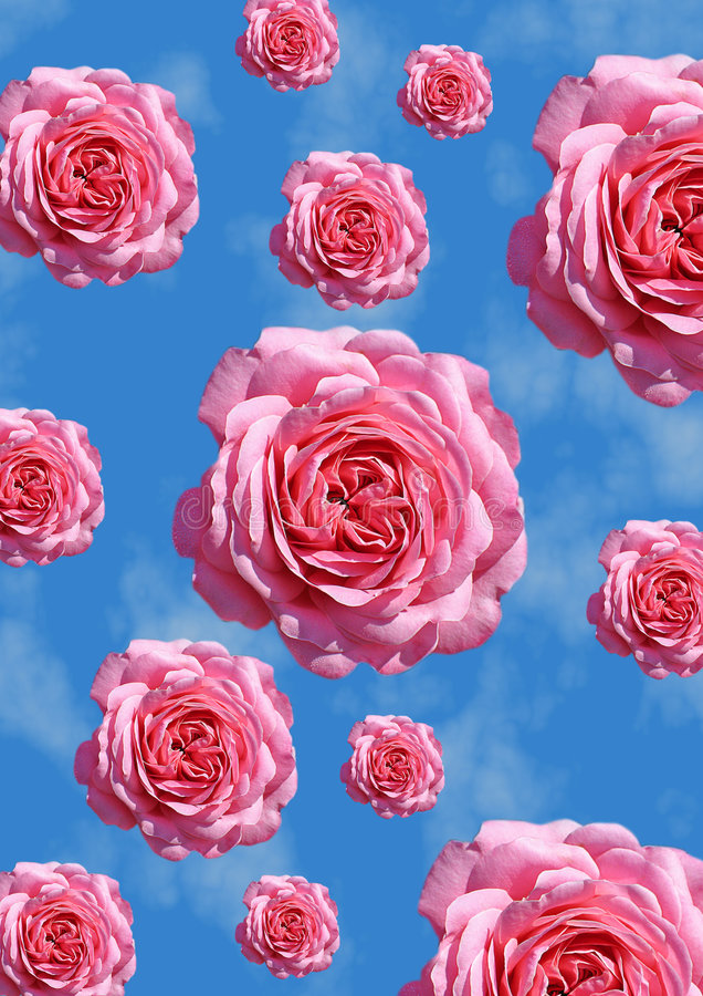 Download Roses stock illustration. Image of isolated, pink, rain - 3238948
