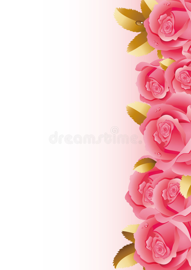 Roses. Vector illustration - fine blossoming roses