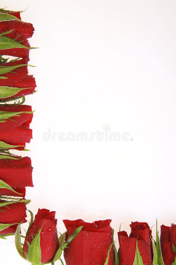 Download Roses stock photo. Image of romance, celebrate, giving - 412638