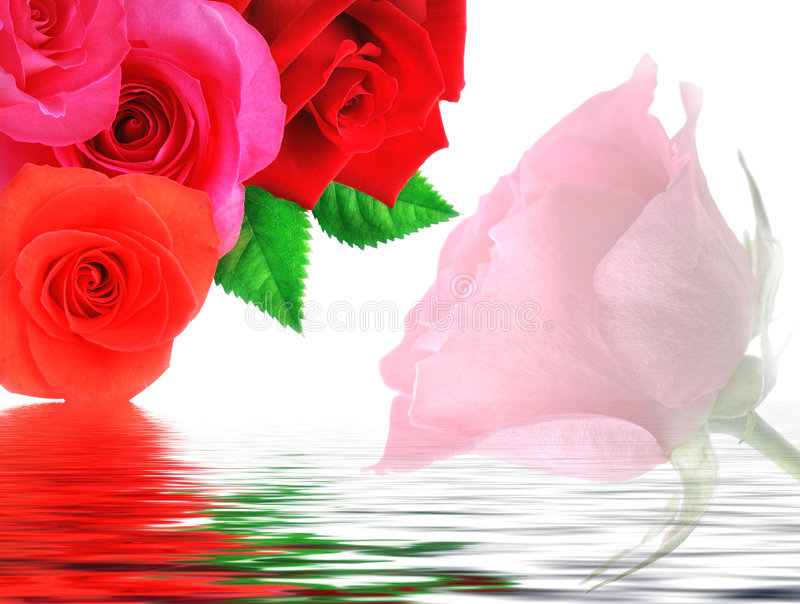Download Roses stock image. Image of decoration, beautiful, beauty - 4858843