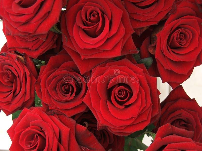 Download Roses image stock. Image du cadeau, rouge, jardin, groupe - 89049