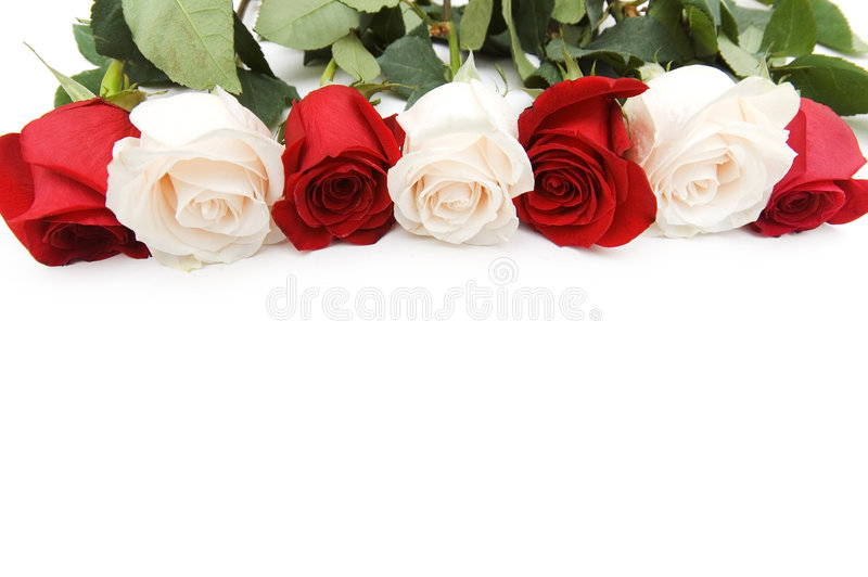 Roses arranged on white background with copyspace