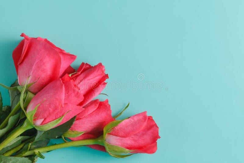 Roses au-dessus de contexte rose brouillé photos stock