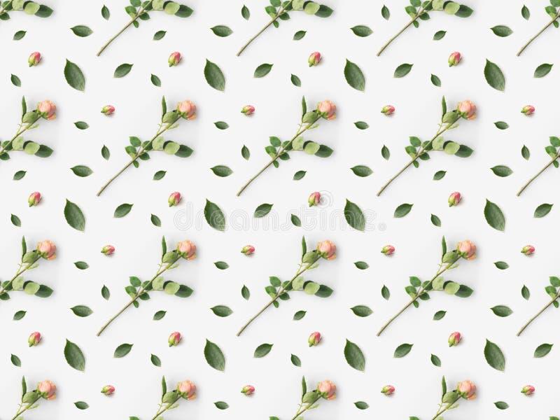 roses roses avec des pétales placés dans rangées photo libre de droits