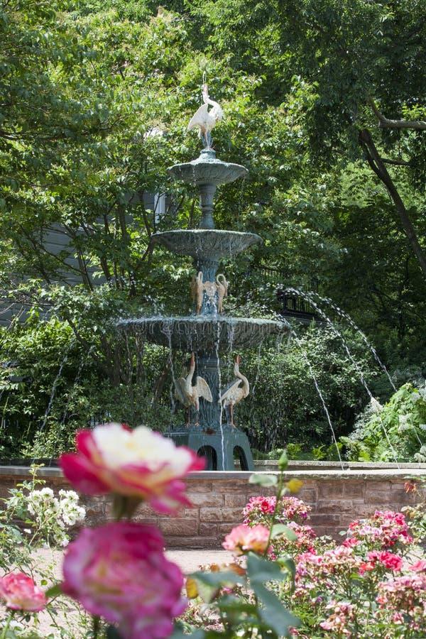 Roses avec la fontaine chez Merrick Rose Garden photos libres de droits