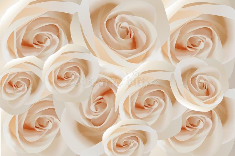 Roses blanches illustration libre de droits