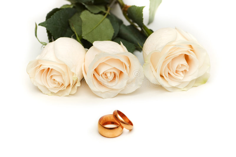 Roses blanches d'isolement images stock