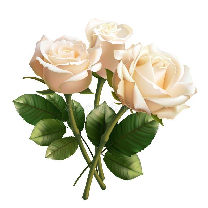 Roses blanches réalistes d'isolement sur le fond blanc photographie stock