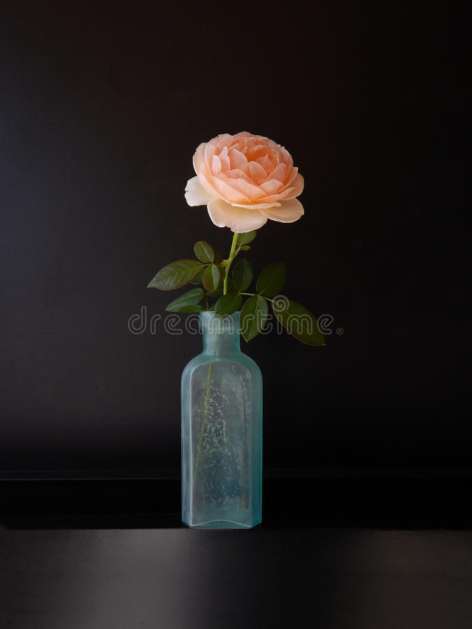 Roses in bottle royalty free stock photo