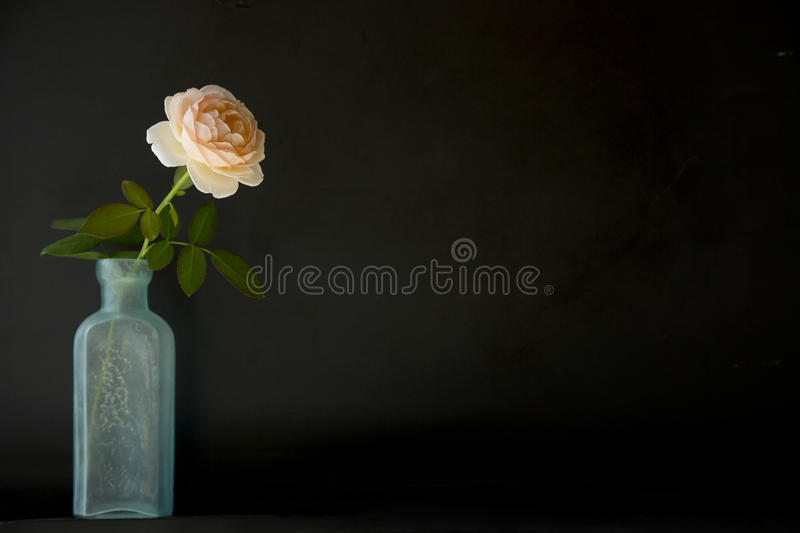 Roses in bottle stock images