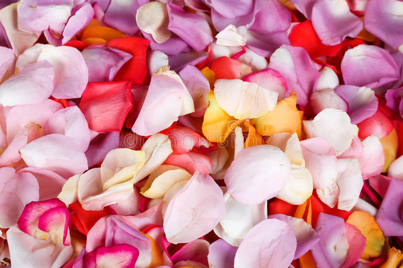 Roses in bouquets. This is roses in bouquets royalty free stock photos