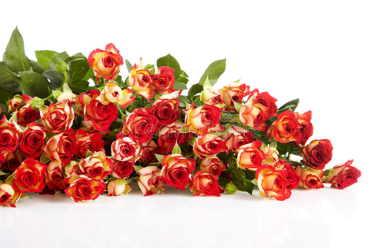 Download Roses In A Bunch Isolated On A White Background Stock Image - Image: 24217037