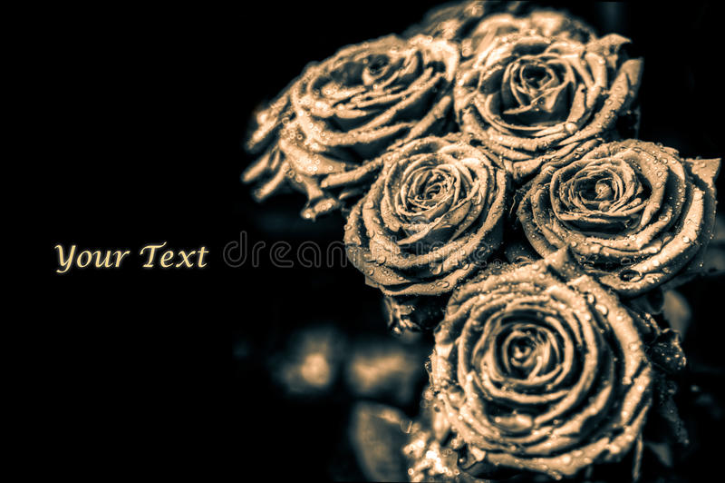 Roses card royalty free stock photos