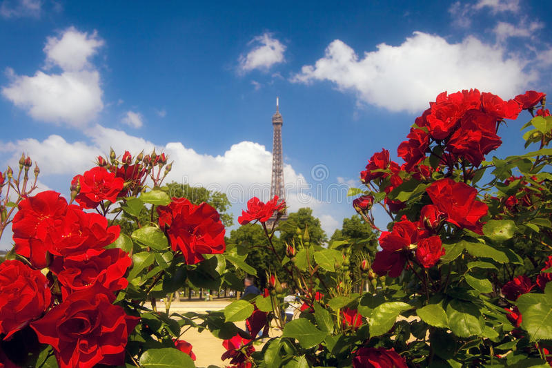 Roses at Champ de Mars. Roses at The Champ de Mars. A large public greenspace in Paris, France royalty free stock photo