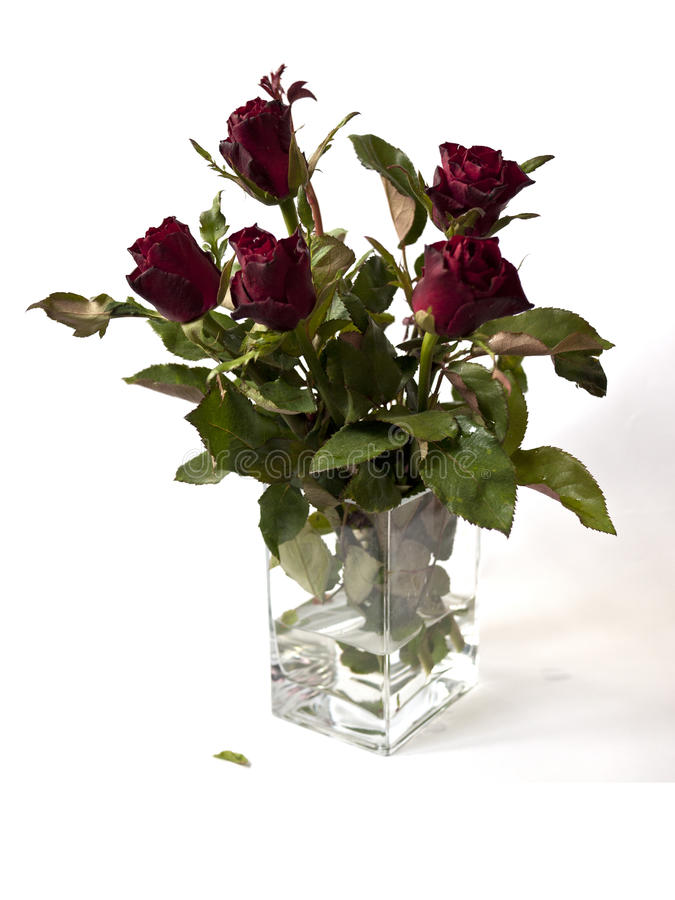 Roses in a clear glass vase. A clease glass vase of roses on white background royalty free stock image