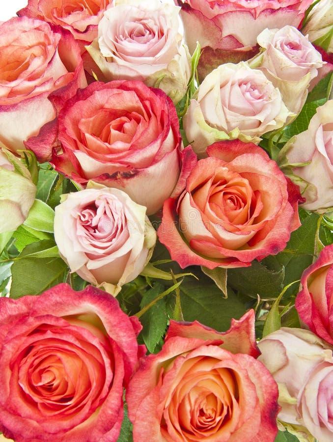 Free Roses Close Up Stock Photo - 23077850