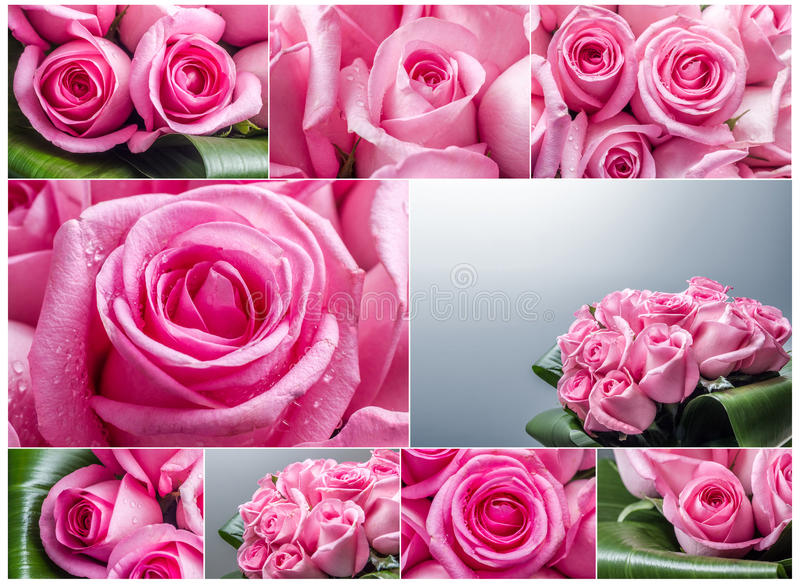 Roses collage royalty free stock images