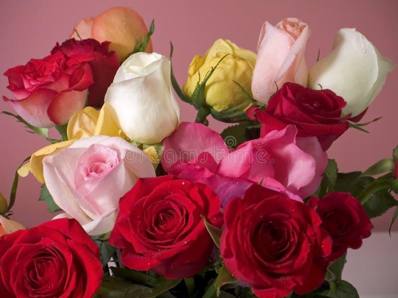 Roses colorées photographie stock