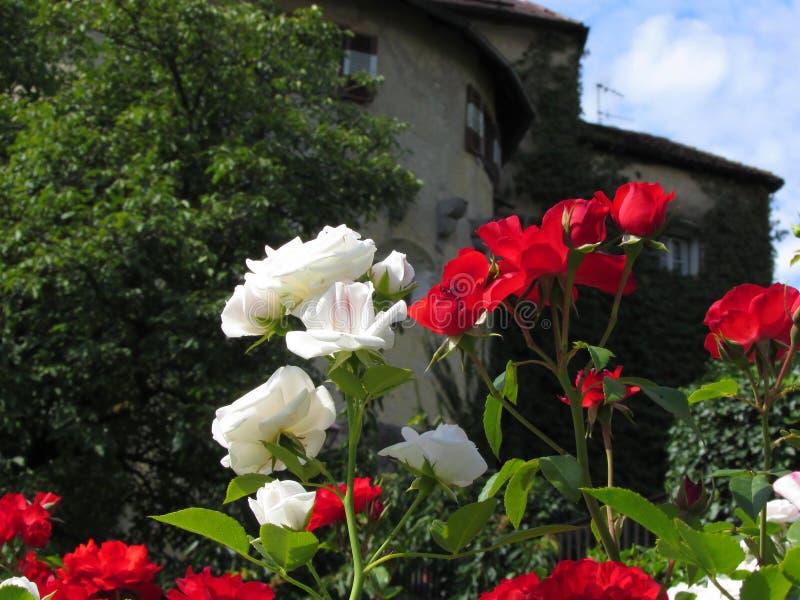 Download Roses Colorées Dans Le Jardin Du Château Photo stock - Image du italie, pureté: 45350114