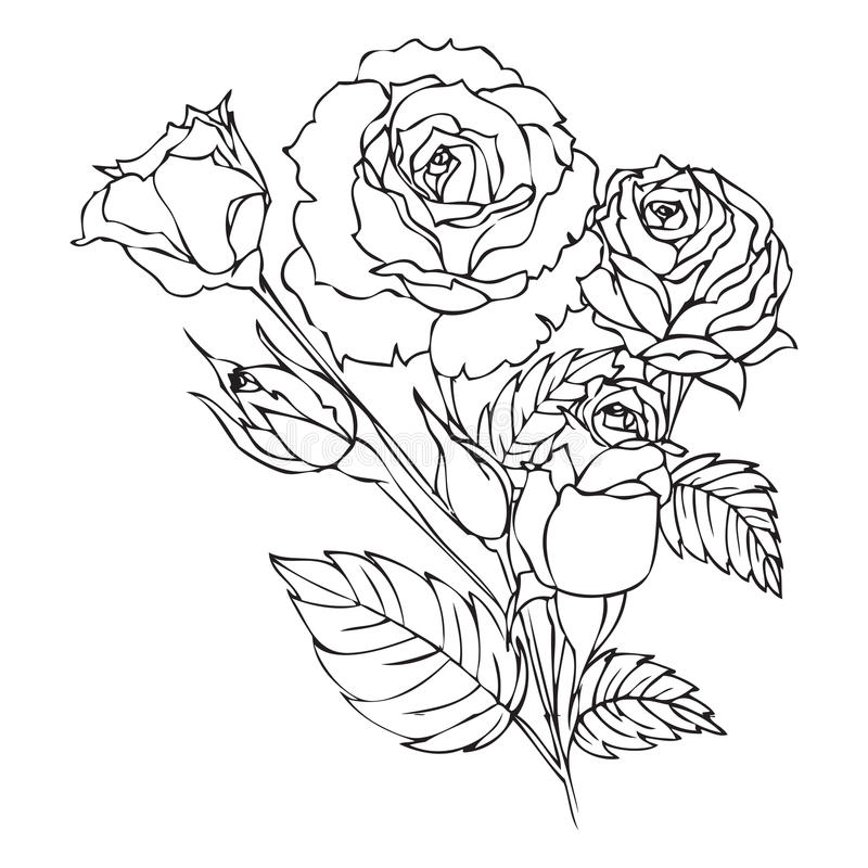 Contour Line Drawing Rose : Roses contour drawing stock illustration image of graphic