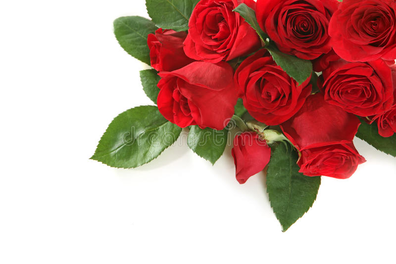Download Roses With Copy Space For Your Text Or Image Stock Image - Image: 12363695
