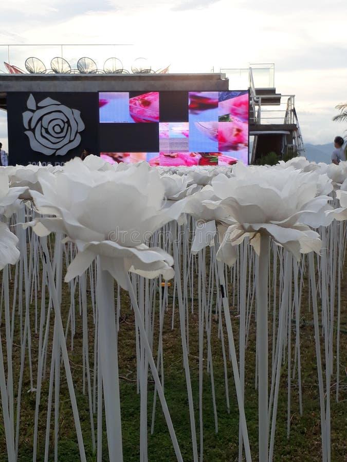 10,000 Roses Cordova Cebu. Philippines royalty free stock image