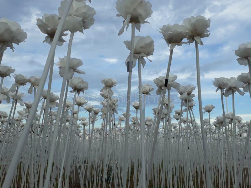 10,000 Roses Cordova Cebu. Philippines royalty free stock photo