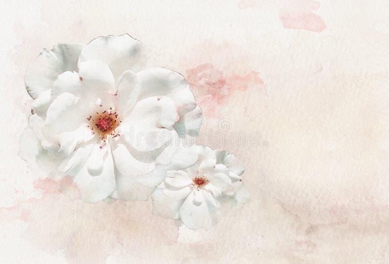 Roses 2 d'aquarelle illustration de vecteur