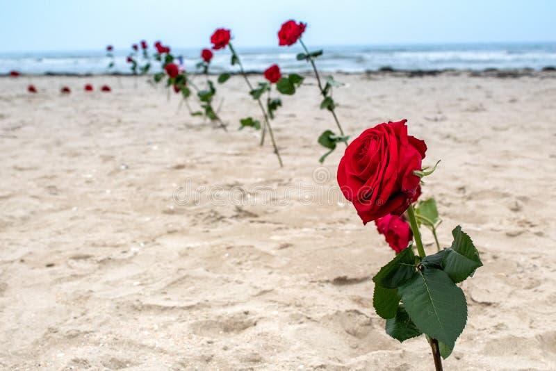 Roses dans la mémoire aux héros sur la plage de l'Utah en Normandie, France Jour J 75 ans photos libres de droits