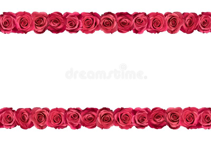 Roses roses dans les rangées 3 illustration stock