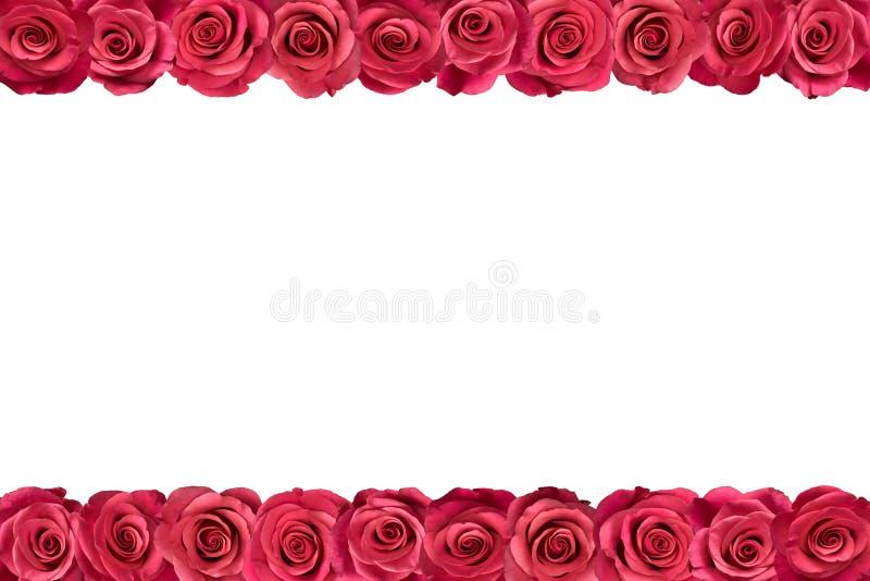 Roses roses dans les rangées 2 photo libre de droits